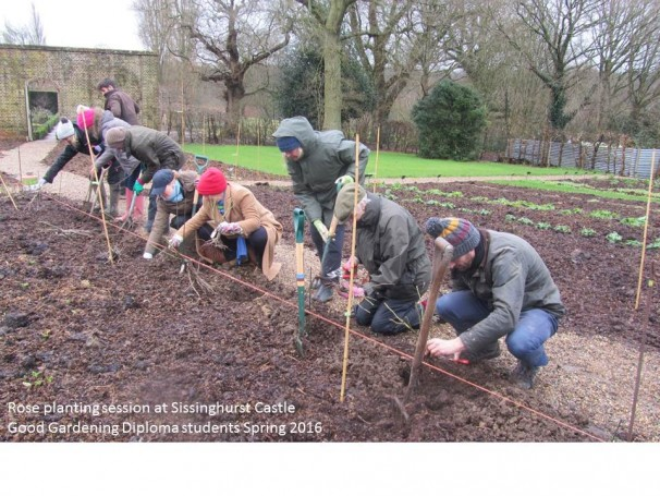 ROSE PLANTING SESSION AT SISSINGHURST