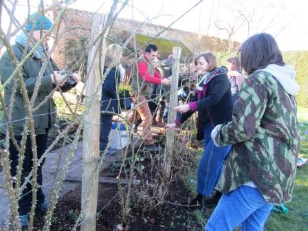 GG students Feb 2017 - pruning roses @Sissinghurst144 WEB